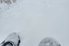 Snowshoeing at Downybrook