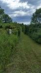 downybrook-trails-7