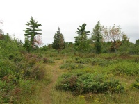 chaumontbarrens4