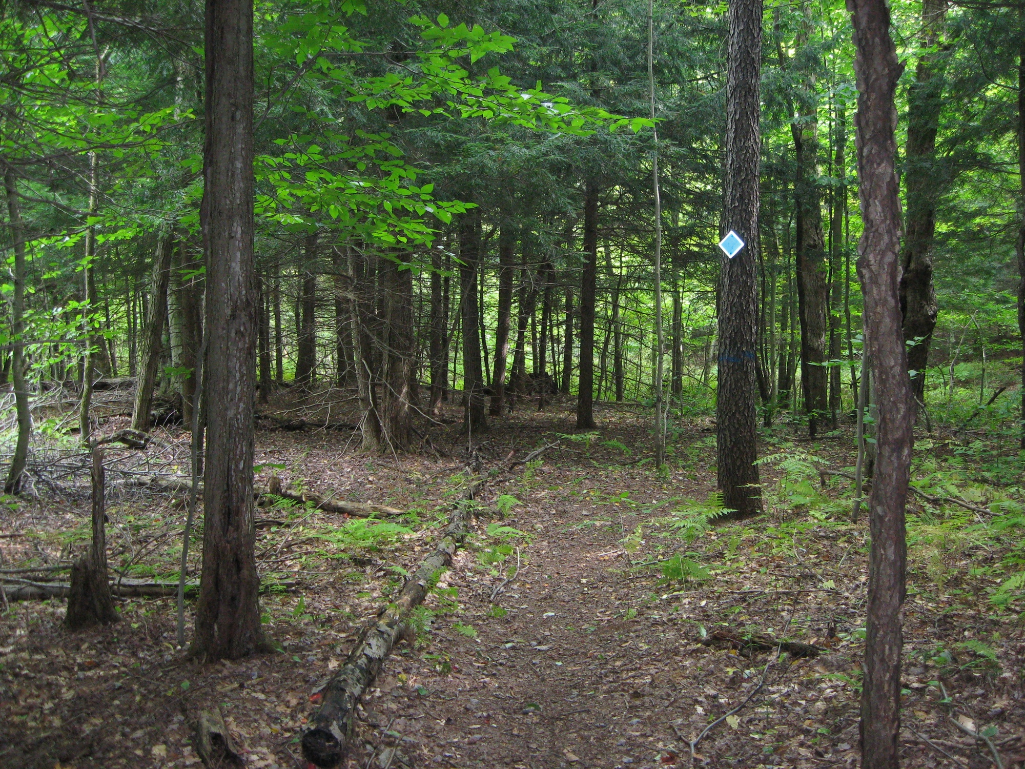 A view along one of the trails.