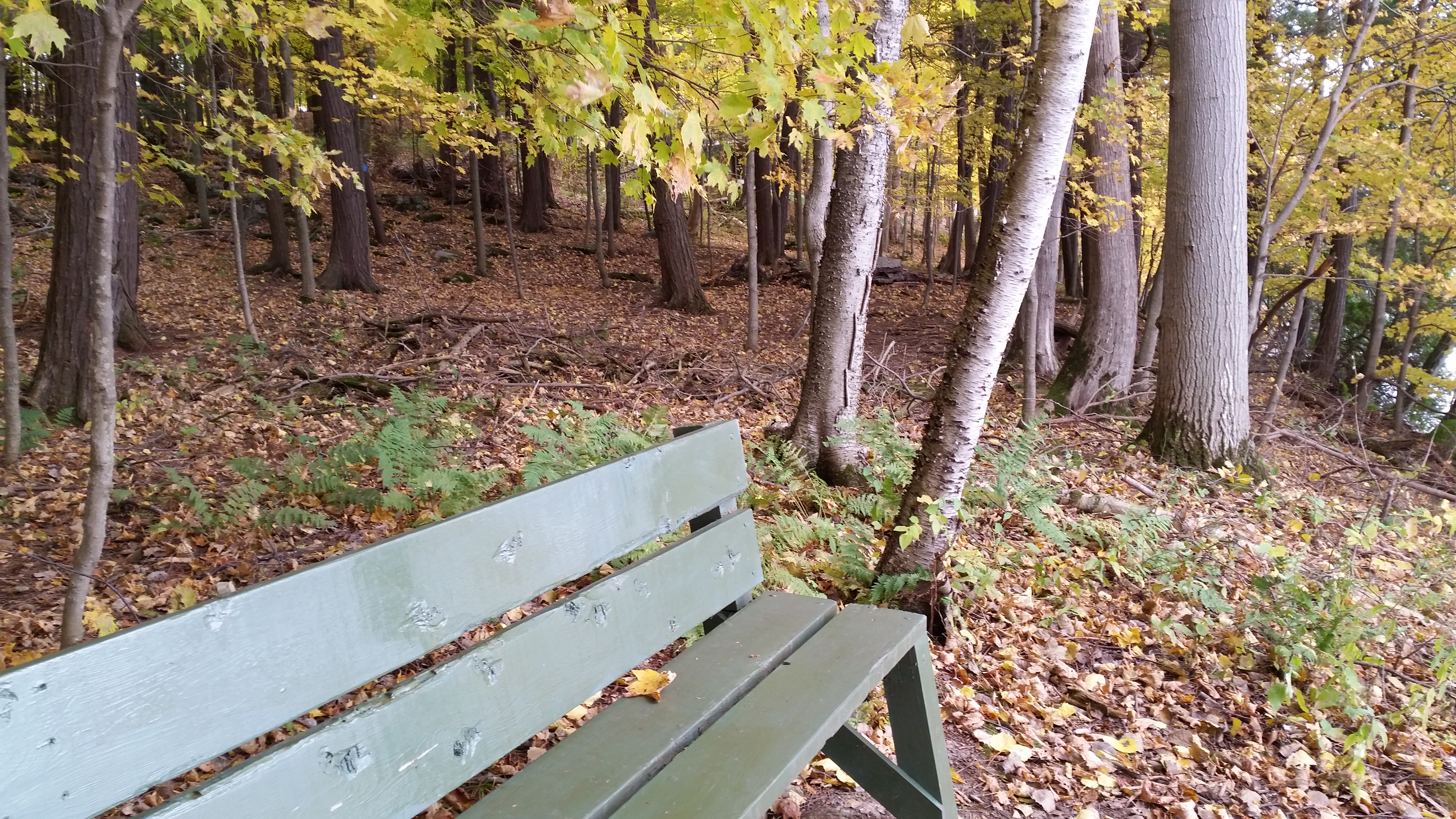 Foster-Blake Woods Nature Trail (1)