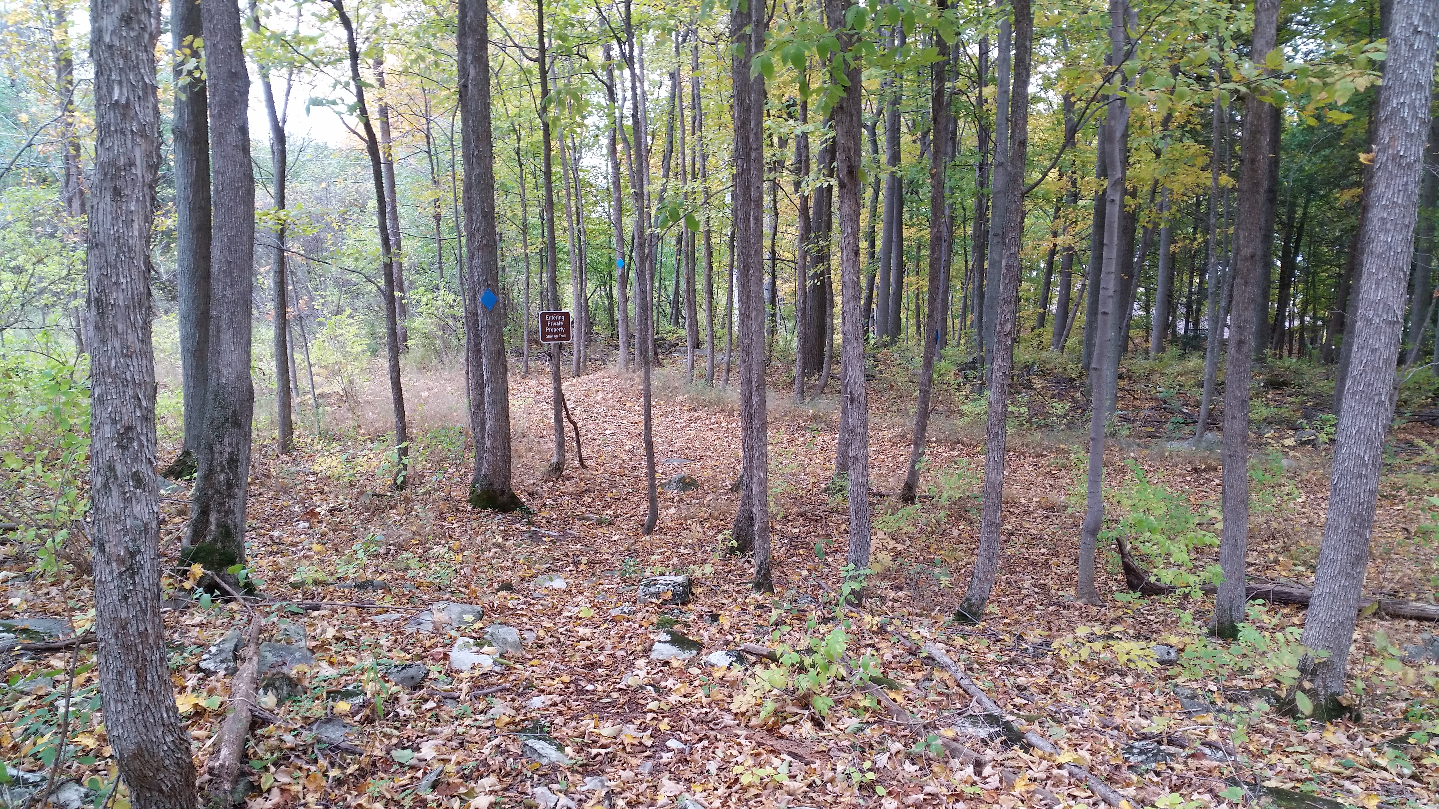 Foster-Blake Woods Nature Trail (4)