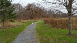Other Lakeview Trail