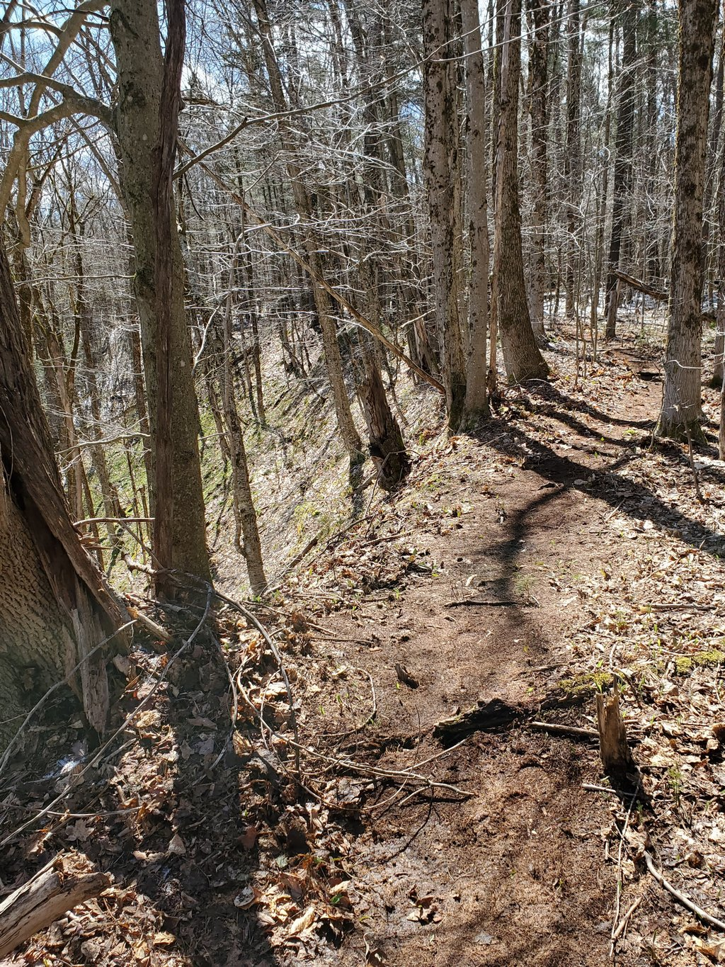 New trail section (Blue Trail)