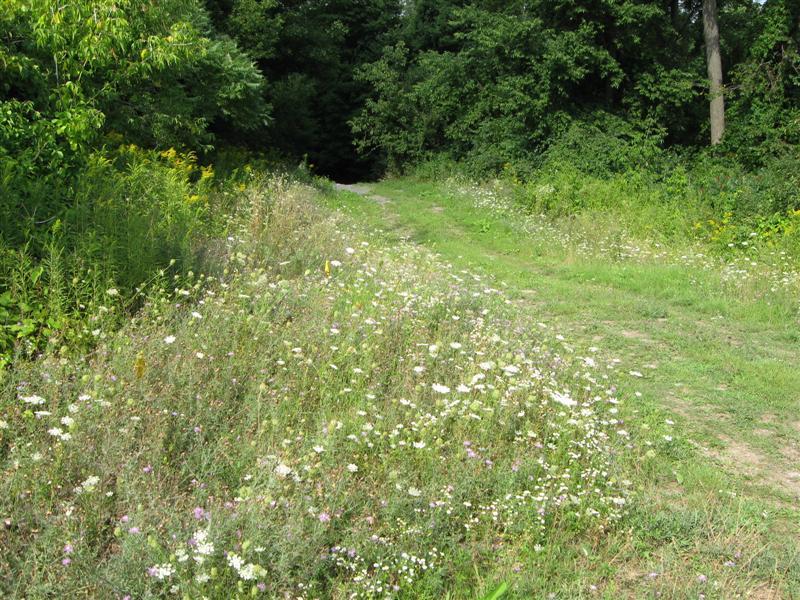 Olmstead Trail