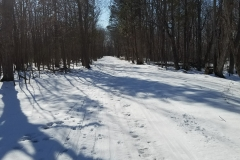 Winter on the Wehle Trail system