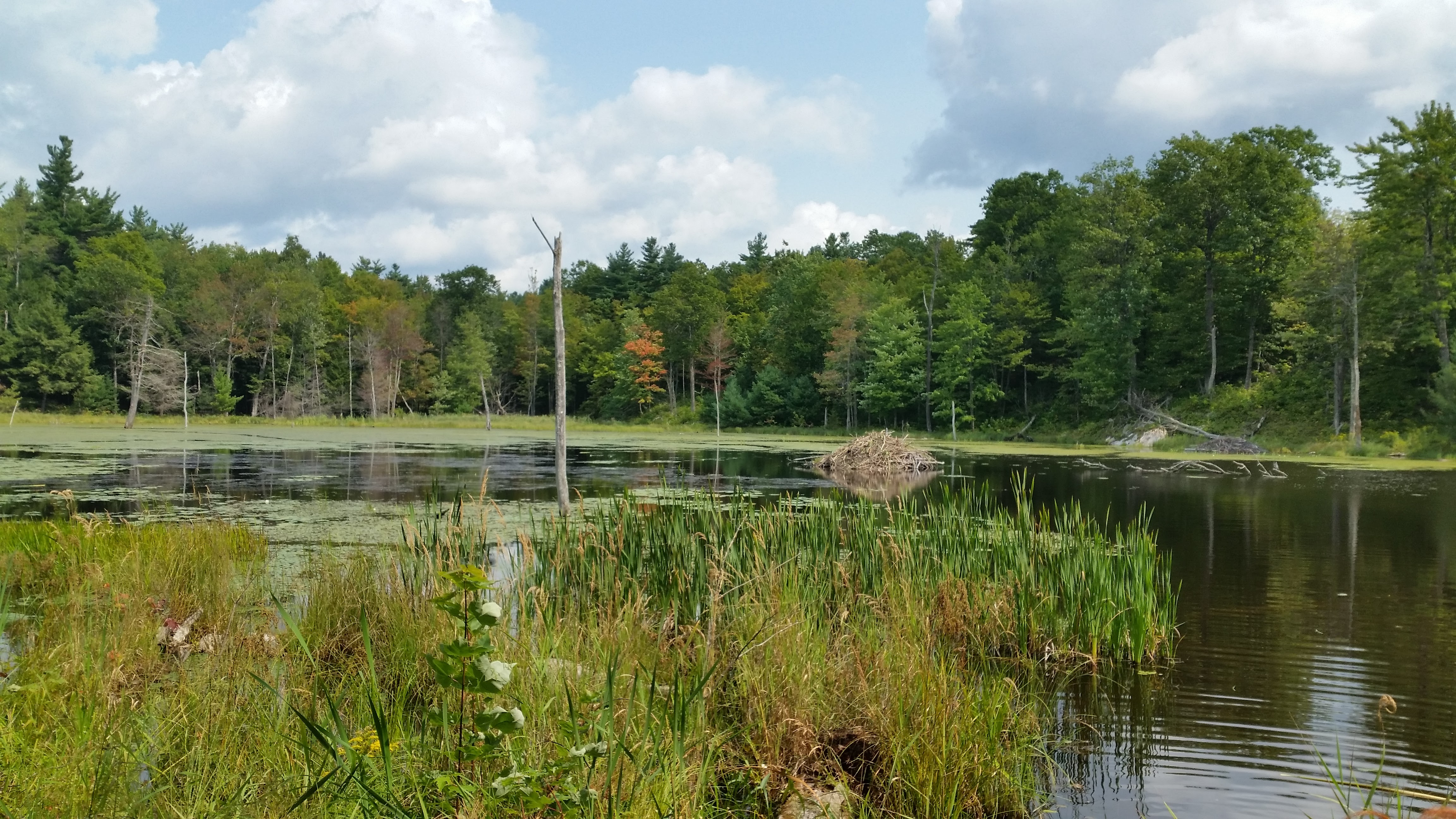 Wolf Lake State Forest Trails (2)
